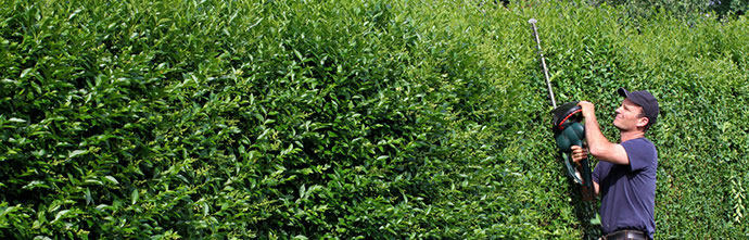 Gartenarbeiten - Heckenschnitt